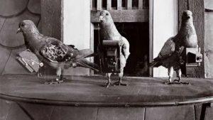 Palomas fotógrafas, los insólitos drones espía de la Primera Guerra Mundial